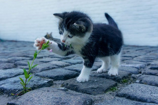 kitten pawing at a flower